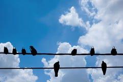 鸟剪影在电钢缆的在白色backgroun 免版税库存图片