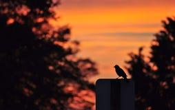 鸟剪影在路牌的 库存照片