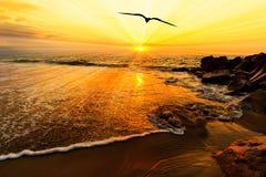 鸟剪影飞行海洋日落太阳光芒 库存图片