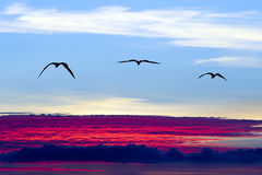 鸟剪影飞行 免版税图库摄影