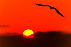 鸟剪影飞行 图库摄影