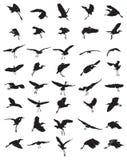 鸟剪影 免版税库存照片
