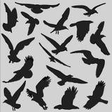 鸟剪影 免版税图库摄影