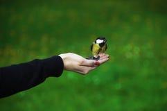 鸟北美山雀 免版税库存照片