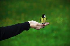鸟北美山雀 免版税图库摄影