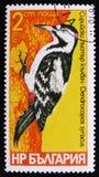 鸟叙利亚人,系列啄木鸟,大约1978年 免版税库存图片