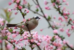 鸟吃着花叶子  免版税库存图片