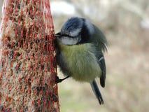 鸟吃 免版税库存图片