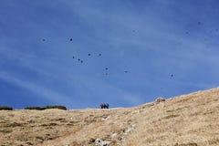 鸟和人们山的 免版税库存图片