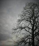 鸟和光秃的分支在非常老A,巨大的树3 免版税图库摄影