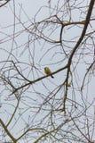 鸟和动物在野生生物 免版税库存照片