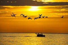 鸟和在日落的一条小船 免版税库存照片