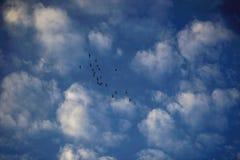 鸟和天空在秋天 免版税图库摄影