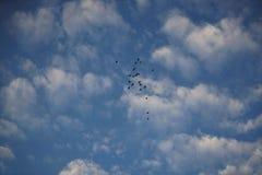 鸟和天空在秋天 库存照片