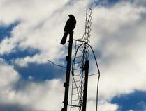 鸟和天空 库存图片