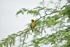 鸟和嵌套 免版税库存图片