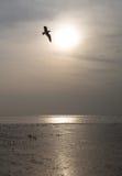 鸟和日落 免版税库存照片