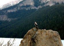 鸟和春天雪 免版税库存图片