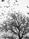 鸟和树 免版税图库摄影