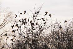 鸟和树 免版税库存图片