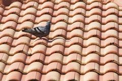 鸟和棕色屋顶 免版税图库摄影