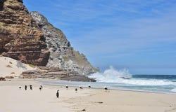 鸟和波浪在Dias海滩 免版税图库摄影