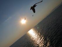 鸟和海 库存图片