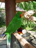 鸟和爬行动物公园在巴厘岛,一只绿色鹦鹉 库存照片