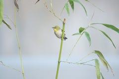 鸟和竹子 免版税图库摄影