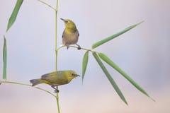 鸟和竹子 免版税库存图片