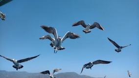 鸟和蓝天 免版税库存照片