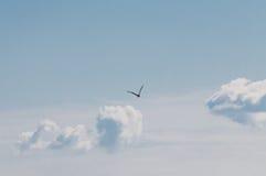 鸟和蓬松云彩 库存照片