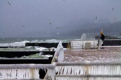 鸟和风暴在一个码头在黑海 库存图片