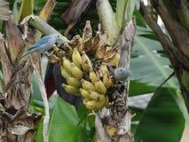 鸟和香蕉 免版税库存照片