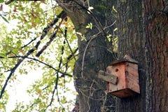 鸟和鸟房子巢树的 库存图片
