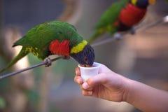 鸟哺养 免版税库存图片