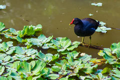 鸟哺养 库存图片
