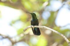 鸟哼唱着结构树 免版税库存照片