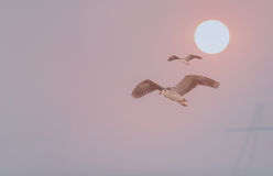 鸟在与太阳的背景飞行 图库摄影