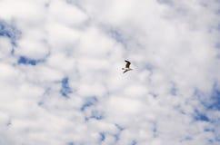 鸟在与白色云彩的天空飞行 海鸥飞行  自由和独立的概念 免版税库存照片