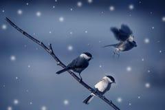 鸟在冬天 库存照片