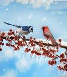 鸟在冬天 库存例证