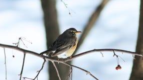 鸟在冬天 免版税库存图片
