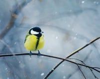 鸟在前面弯成拱状坐一个分支在冬天的好的鸟 库存照片