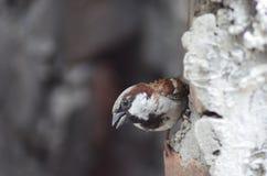 鸟在印度 免版税库存图片