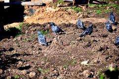 鸟在土壤地面飞行 库存图片