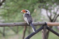 鸟在埃塞俄比亚 库存图片