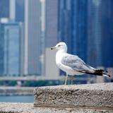 鸟在城市 免版税库存图片