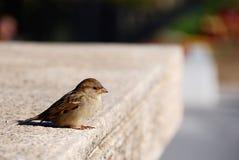 鸟在城市 库存图片