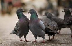 鸟在大广场 库存照片